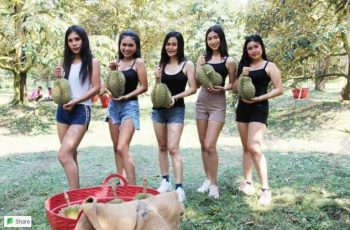 Sexy dancers resort to cutting Durian to make ends meet